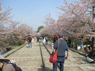 京都・蹴上インクラインから「醍醐の花見」まで