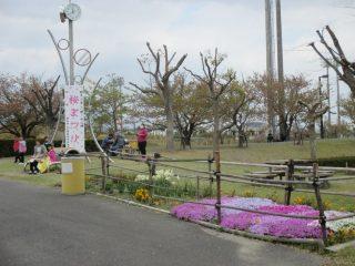 4月7日(土)、緑地公園さくら祭りが開催されました!