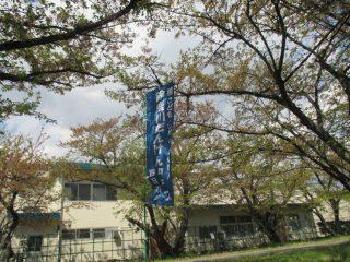 4月8日(日)、鈴鹿川たんけんクラブ、宝さくら祭りを共催しました。