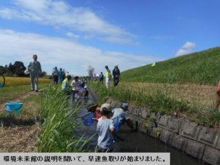 地域活動費事業・本郷川生き物観察の再掲載