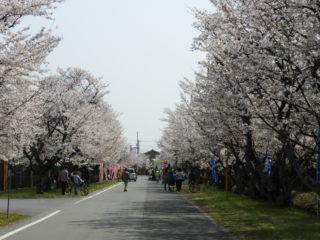 4月7日(日)宝さくら祭り開催