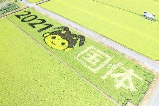 田んぼアート収穫祭のお知らせ