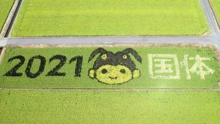 田んぼアート稲刈り体験の様子をお伝えします