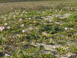 5月2日(日)吉崎海岸早朝清掃・環境学習中止のお知らせ
